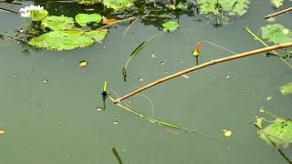 Best Fishing Video (Part~130)