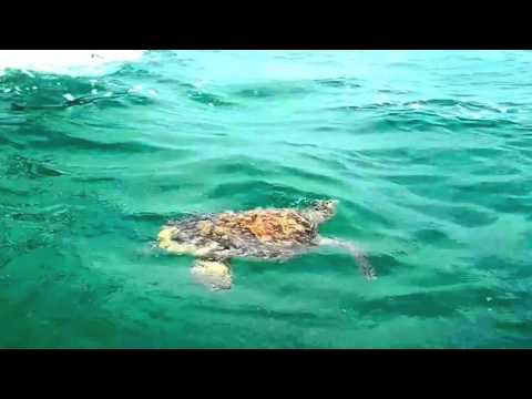 Riviera Maya Excursion: Sian Ka´an – Punta Allen