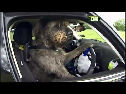 Rescue Dogs Taught How To Drive A Car In New Zealand