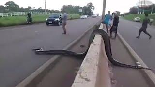 САМАЯ БОЛЬШАЯ ПОЙМАННАЯ ЗМЕЯ.10 Самых больших змей в Мире