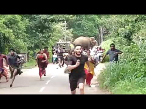 Wild elephant chasing people