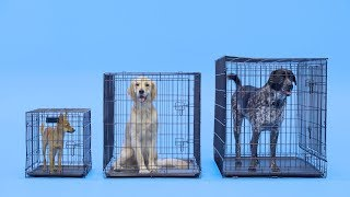 Dog Crate Size: What Size Dog Crate Is Best? | Chewy