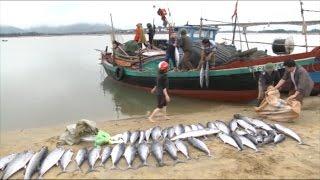 Tin Tức 24h Mới Nhất Hôm Nay: Ngư dân Hà Tĩnh vươn khơi, bám biển