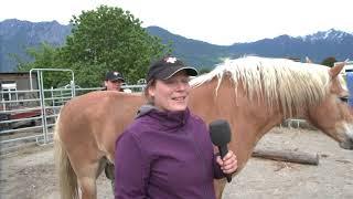 Videobeitrag zur SFRV HorseChallenge Werdenberg 2018
