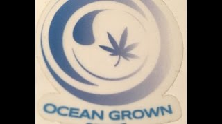 Germinating Cannabis Seeds! - Marijuana Seeds Germination Process