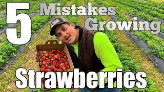 5 Biggest Mistakes when Growing Strawberries!