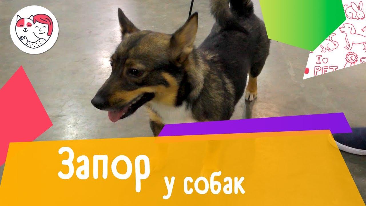 7 распространенных причин запора у собак