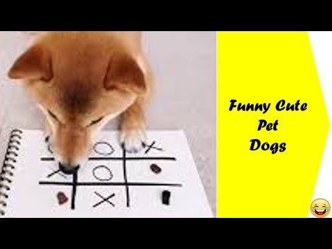 A well Funny Dog Video compilation  2021 you should watch
