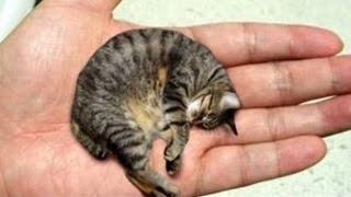 10 Animales Mas Pequeños Del Mundo
