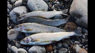 Рыбалка на черного хариуса в сибири