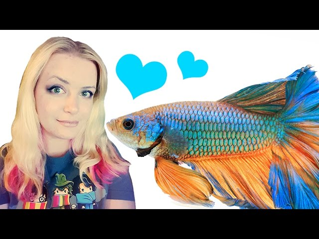 What kind of fish can live with Bettas | Betta Tankmates