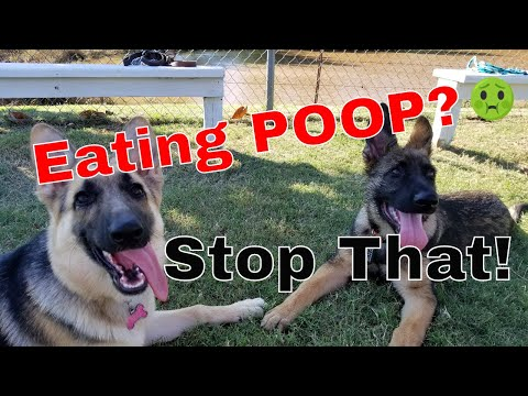 How To Stop Your Dog From Eating Poop