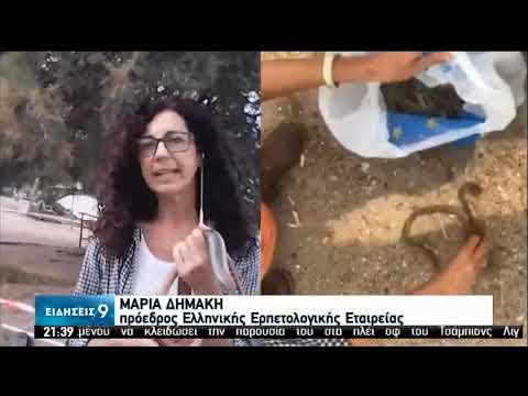 Νεκρά πουλιά και ερπετά από τη θεομηνία ξεβράστηκαν σε παραλίες της Στερεάς Ελλάδας | 9/8/2020 | ΕΡΤ