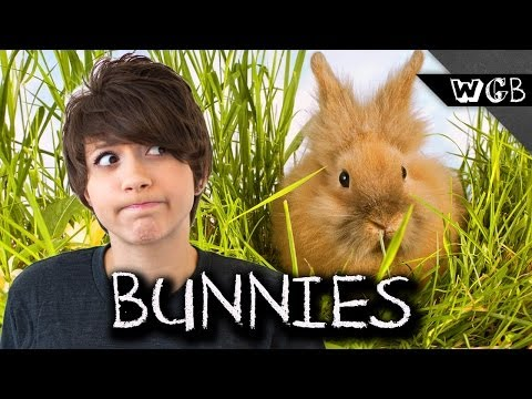 , title : 'How Fast Can Bunnies Reproduce?
