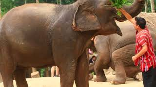 Patara Elephant Farm Chiang Mai Thailand