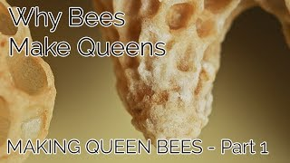 Why Bees Make Queens - Making Queen Bees Part 1