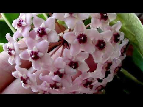 Aranjator de flori parazite. Familie- casa