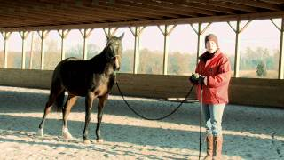 How to Teach a Horse to Lead Safely and Respectfully, Part II