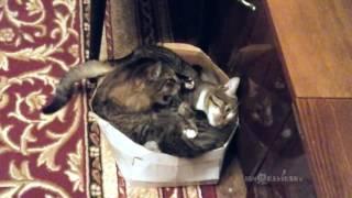Too cramped for two / В тесноте, да не в обиде - Video Youtube