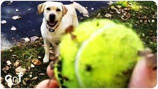 Dog Loves Leaf Piles | Stella