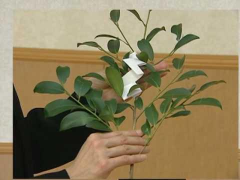 葬儀作法 神道