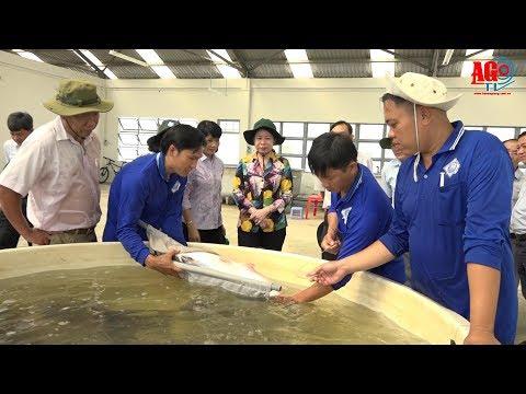 Bí thư Tỉnh ủy khảo sát mô hình sản xuất rau màu và thủy sản ứng dụng công nghệ cao