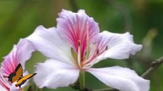 Loài hoa không vỡ _ Võ Sông Vàm