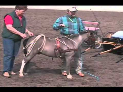 , title : 'Miniature Horse Demo & Driving Seminar