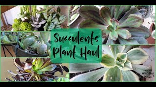Succulent and Plant Haul