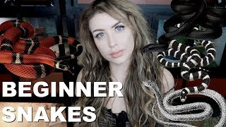 All of the BEST Beginner Snakes (No, Not Ball Pythons)