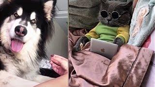 Meilleures Vidéos Drôles de Chat et de Chien 🐶🐱- Best Funny DOGS et CATS #162