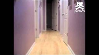 Dog Dashes Between Rooms