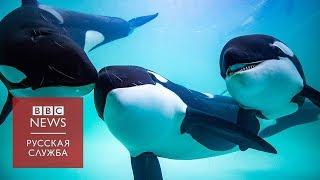 Как косаток из России продают в китайские дельфинарии
