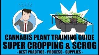 Super Cropping & SCROG Screen of Green - Marijuana Training Techniques