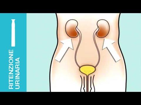 La frequenza di latte la prostata