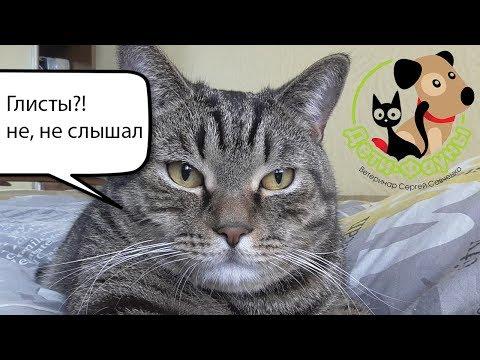 Может ли человек заразиться глистами от домашней кошки или собаки?