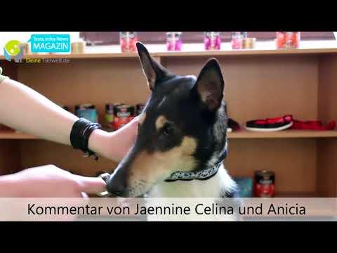 Zugstopp-Halsband von Dog's Finest im Test
