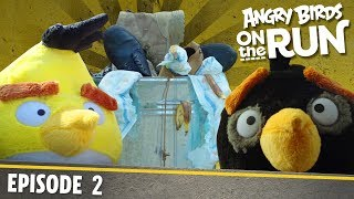 Angry Birds On The Run | Food Hunt   S1 Ep2