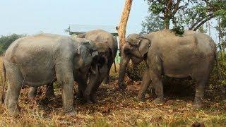 Elephants in Bhuyanpara Range, Manas