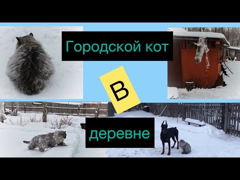 Как поживает городской кот зимой в деревне? How does the city cat fare in the winter in the village?