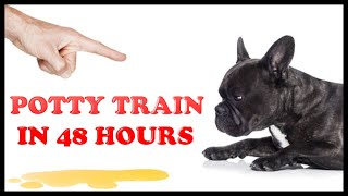 Potty train your dog in 48 hours   3 simple tips