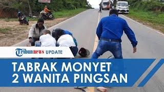Tabrak Monyet Menyeberang, 2 Wanita Pengendara Motor di Muaro Jambi Terkapar Pingsan di Tengah Jalan