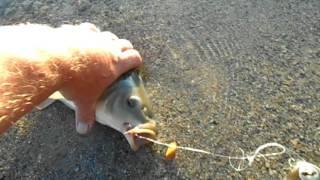 Рыбалка озеро агашкуль