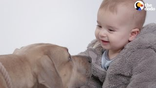 Kids Meet Pitbulls For The First Time | The Dodo