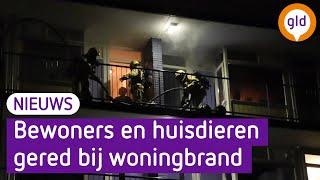 Twee katten en vier hamsters gered bij woningbrand in Apeldoorn