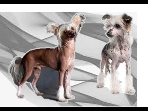 Панкреатит у собаки  . Болезнь поджелудочной железы .