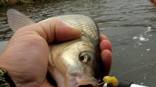 Рыбалка во фрязево форум последняя страница 2019