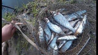 Река иня новосибирской области рыбалка
