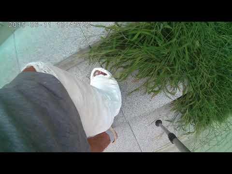 Esercizi per malattia degenerativa del disco lombare del Bubnovskaya