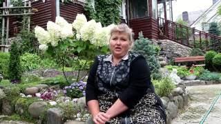 Гортензия: уход, посадка и оберезка видео